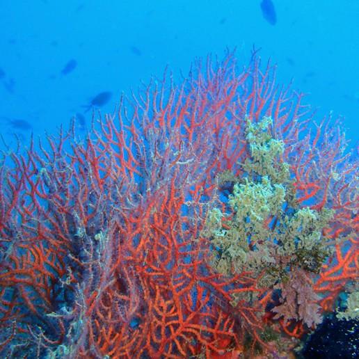 Fondos Marinos de Roquetas de Mar