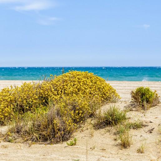 Punta Entinas Sabinar, Paraje Natural de Roquetas de Mar