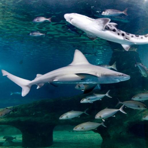 Aquarium de Roquetas de Mar
